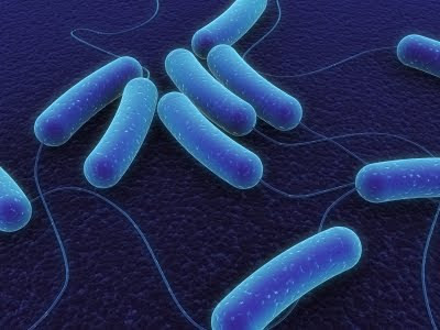 Alteración de la flora bacteriana intestinal
